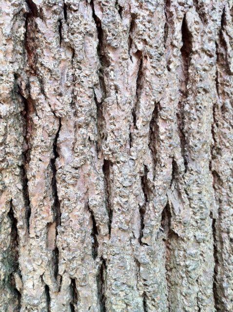 atopic-eczema-lichenification